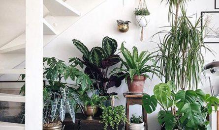 minimalist-indoor-garden-in-under-the-stairs