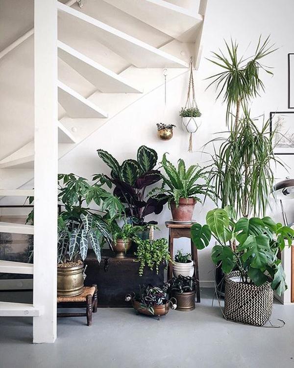 5 Minimalist Indoor Garden Ideas For Limited Space