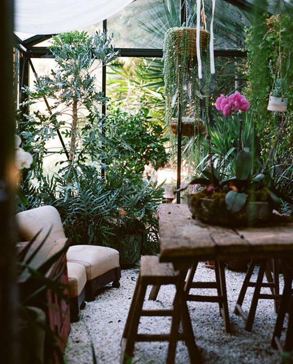 natural-jungle-interior-room