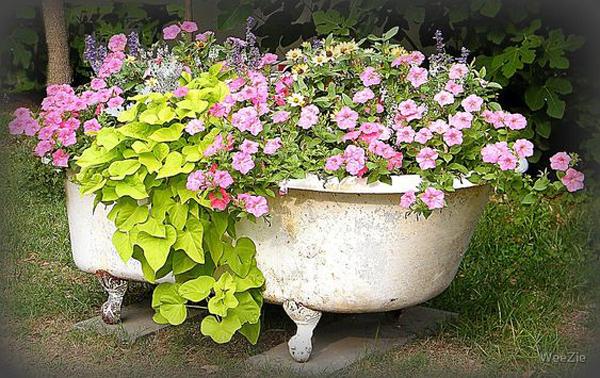 beautiful-flower-garden-with-old-bathtub