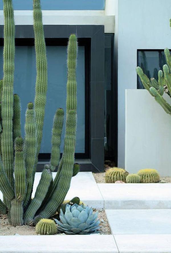 best-desert-landscapes-for-yard