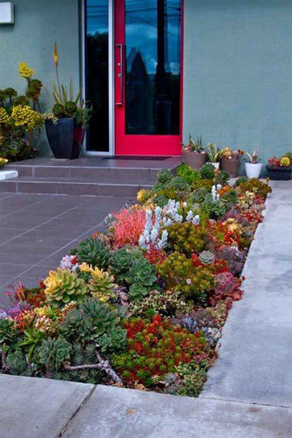colorful-desert-front-yard-garden