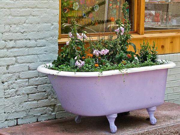 cute-purple-bathtub-flower-plants