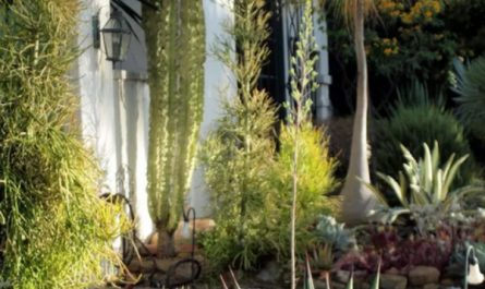 desert-landscaping-ideas-for-front-yard