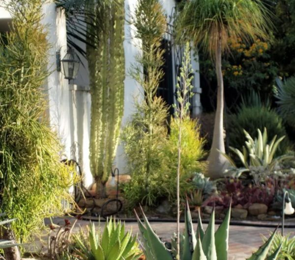 30 Desert Landscaping Ideas With Low Maintenance