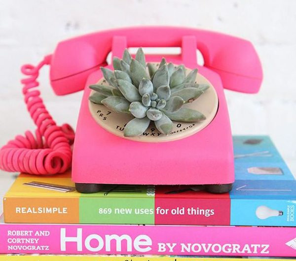 10 Creative Succulent Containers With Low Budget