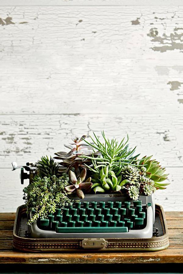 diy-type-writer-succulent-garden