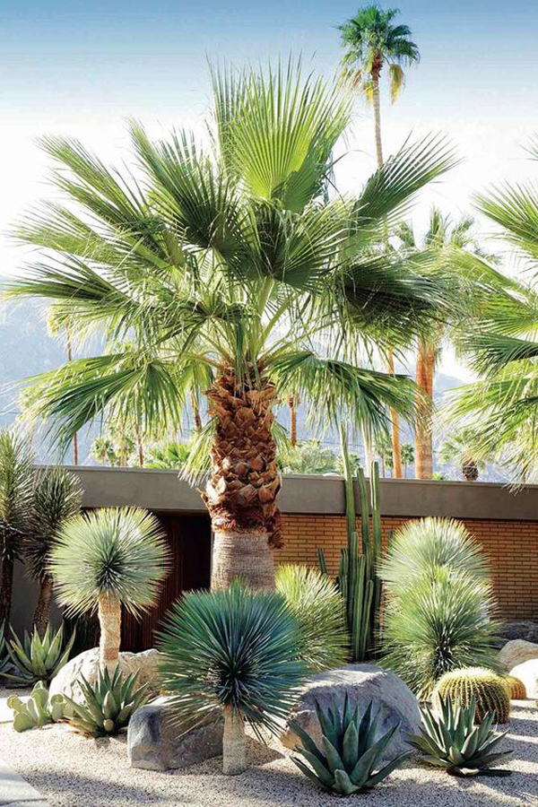low-maintenance-desert-garden-landscapes