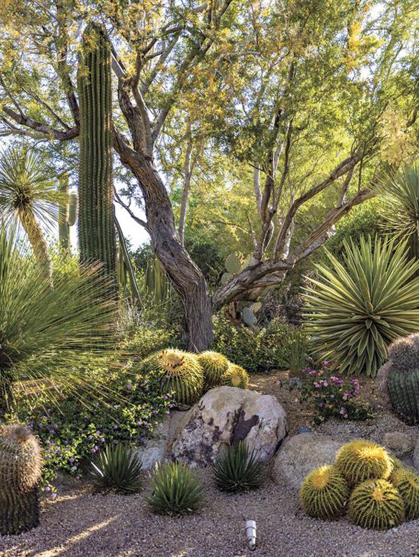 luxury-desert-garden-landscapes