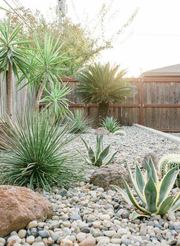 mid-century-desert-landscaping-ideas