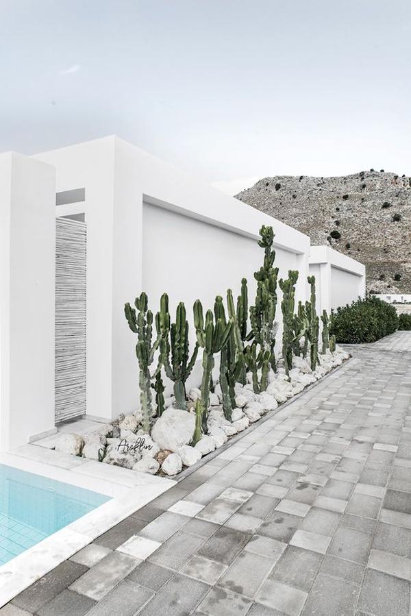 modern-desert-side-pool-garden