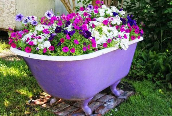 purple-bathtub-container-flower-garden
