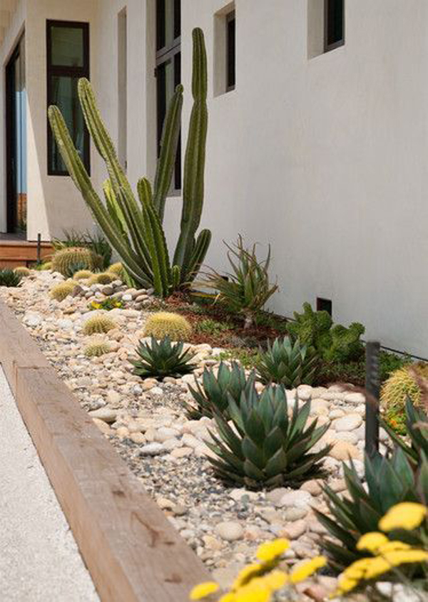 small-desert-landscaping-with-cactus-plant