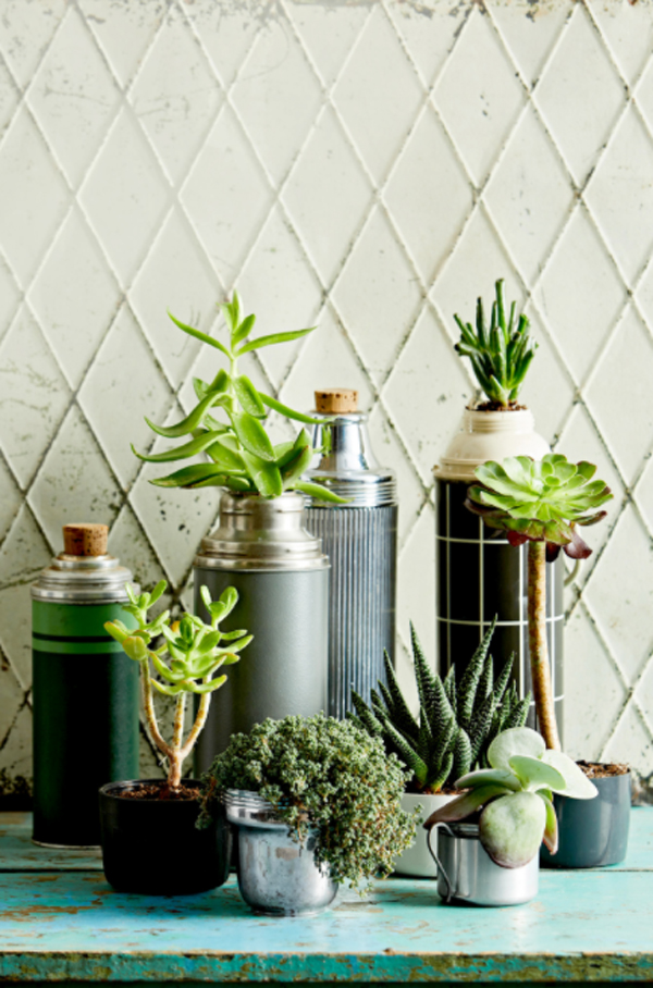 thermos-succulent-display-containers