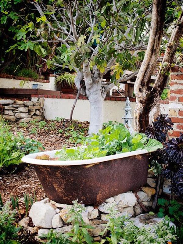 vegetable-container-bathtub-garden