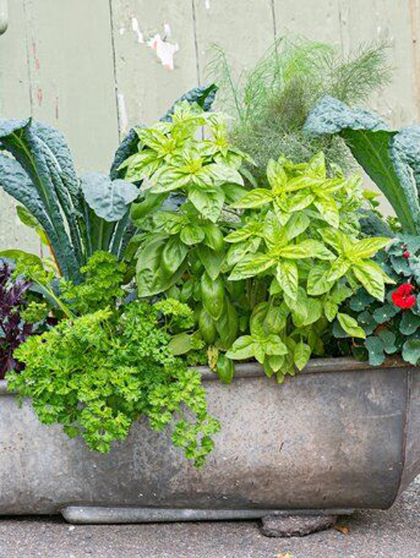 vegetable-diy-bathtub-garden-ideas