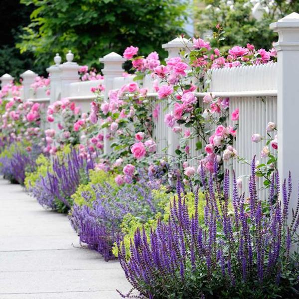 beautiful-fence-flower-gardens