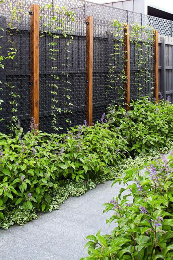 contempory-wall-garden-trellis-ideas