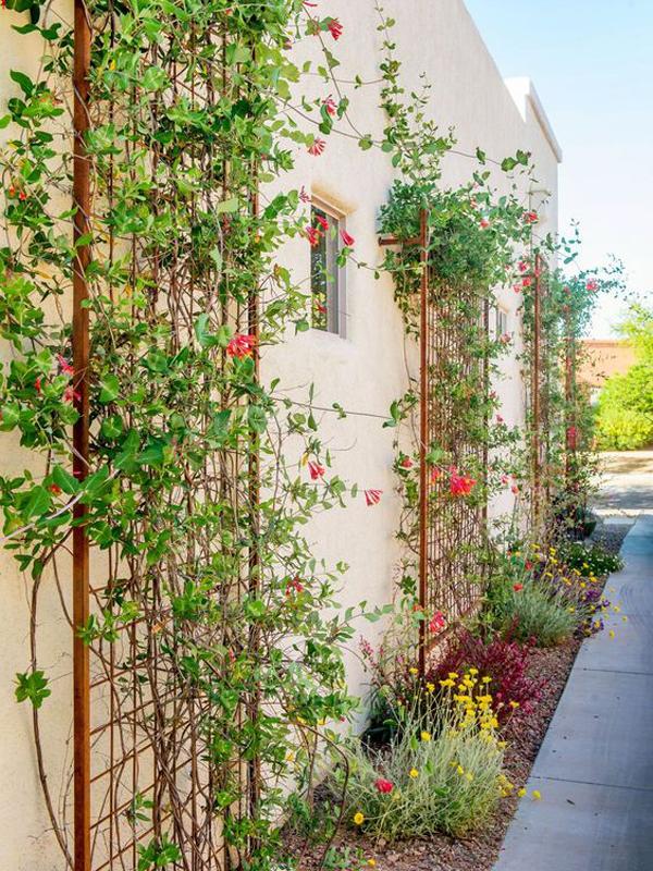 gorgeous-wall-trellis-ideas