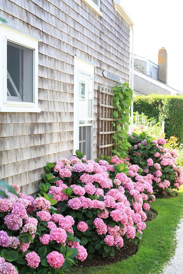hydrange-flower-garden-ideas