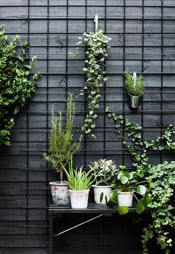 modern-urban-plant-trellis-decor
