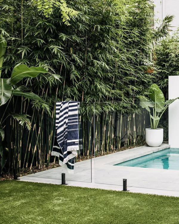 small-swimming-pool-with-bamboo-plants