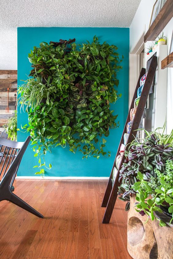 natural-indoor-vertical-garden-with=bold-wall-color
