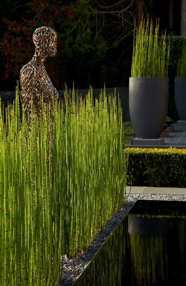 aesthetic-garden-design-with-horsetail-reed-plants