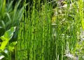 beautiful-horsetail-reed-grass-landscapes