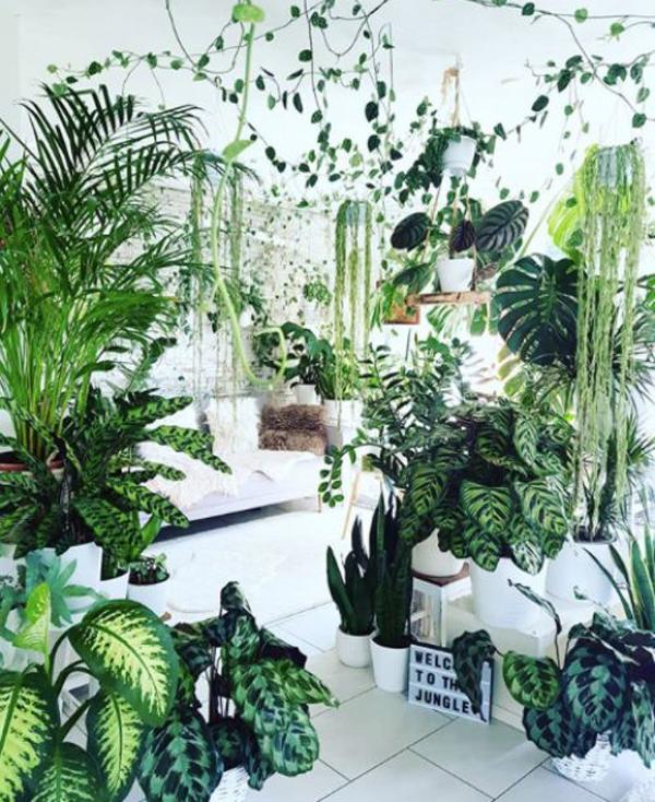 beautiful-houseplant-decor-for-interior
