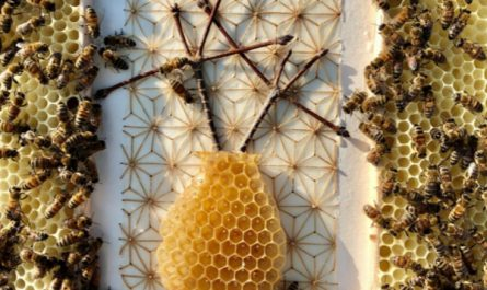 bee-colony-collaboration-by-ava-roth