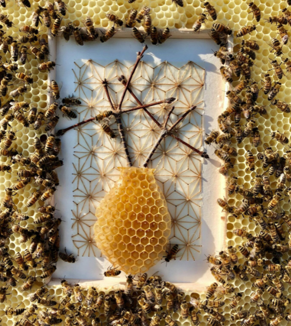 Bee Colony Artwork Collaboration By Ava Roth's