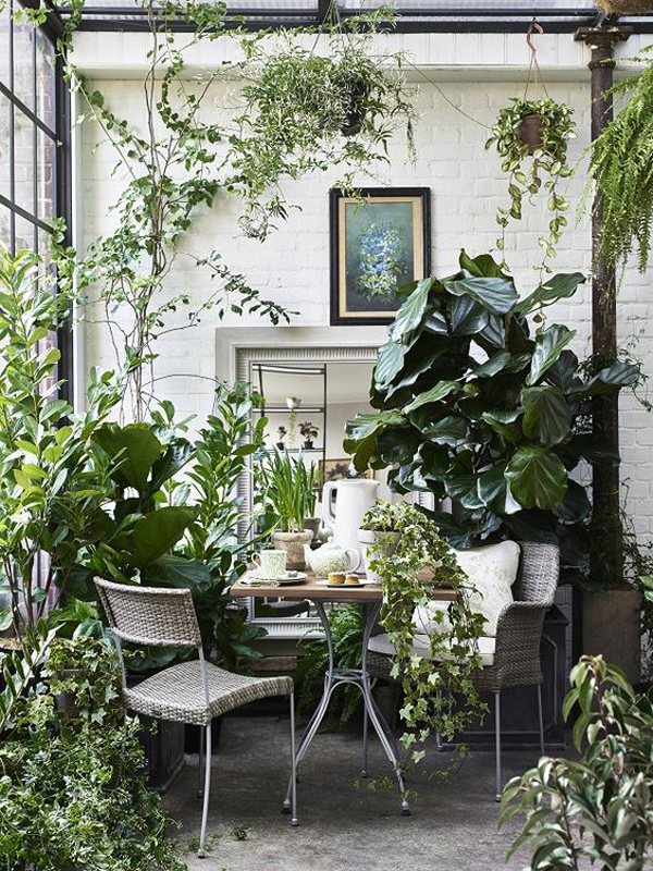 25 Of The Best Popular Interior Design Plants