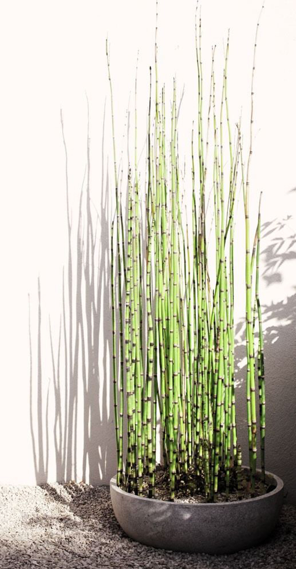 easy-diy-horsetail-reed-container-garden