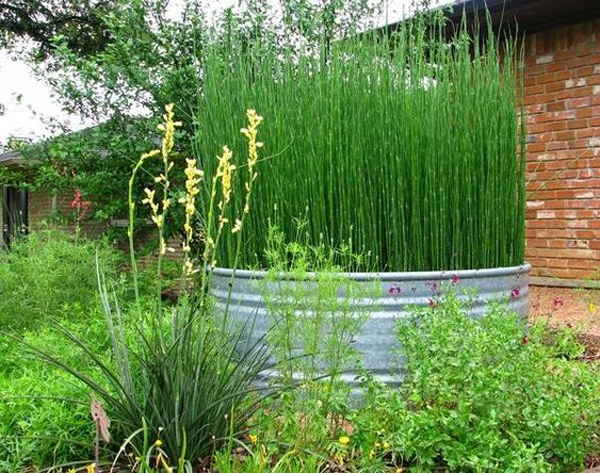 farmhouse-garden-with-horsetail-reed-container