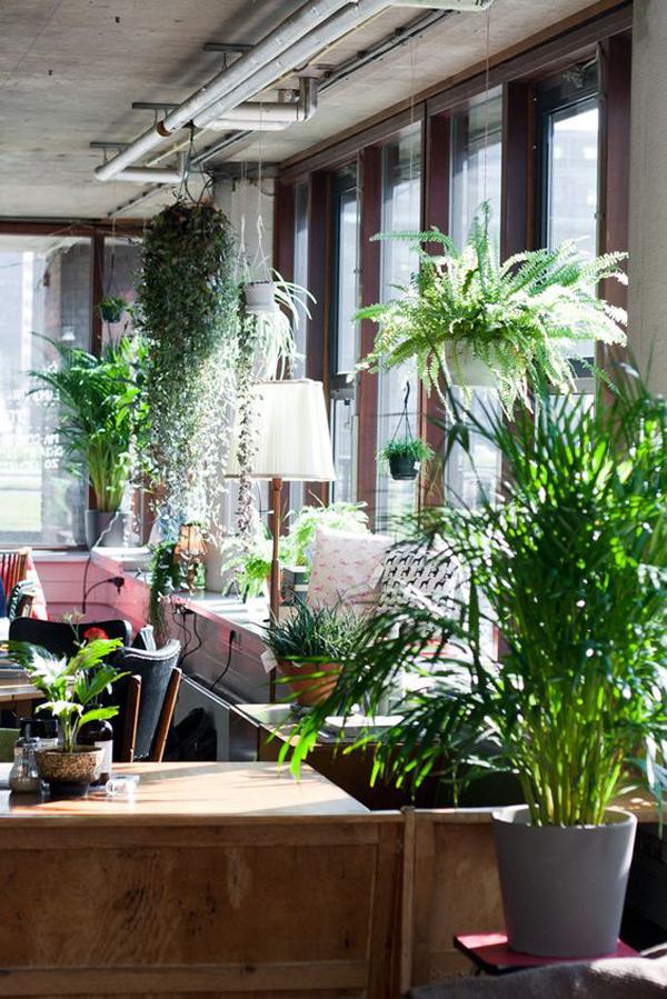 fresh-and-natural-interior-design-plants