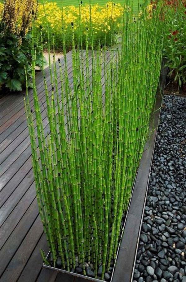 horsetail-reed-grass-fence-garden