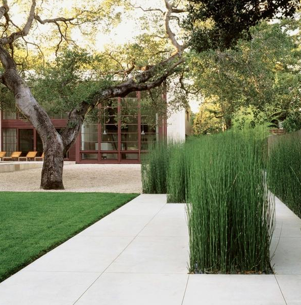 horsetail-reed-landscaping-ideas