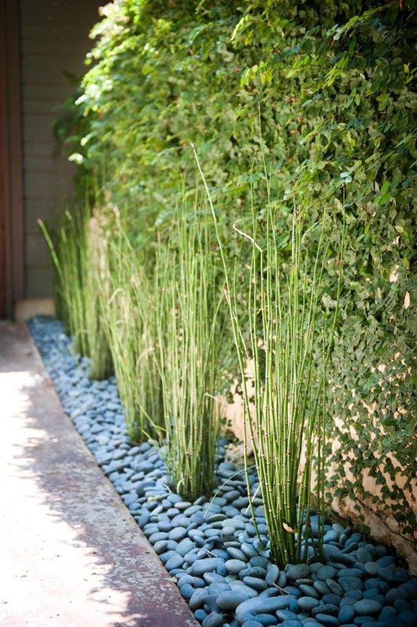 horsetail-reed-with-blue-stone-landscaping-ideas