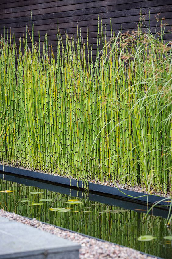modern-garden-pond-with-horsetail-reed-fence