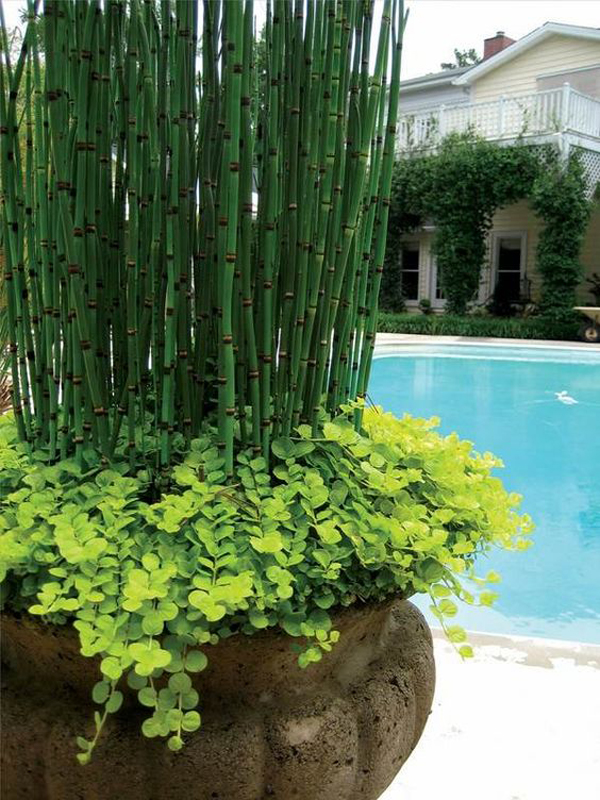 modern-horsetail-reed-container-garden