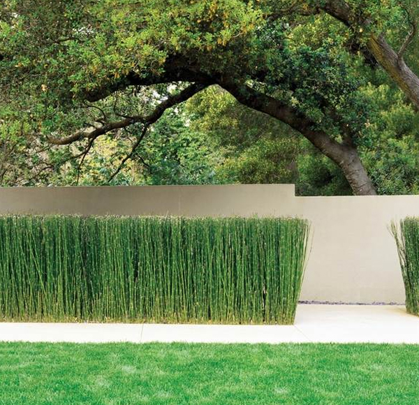 modern-horsetail-reed-privacy-garden
