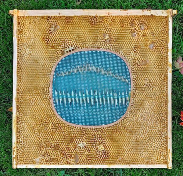 porcupine-quills-honeycomb-artwork