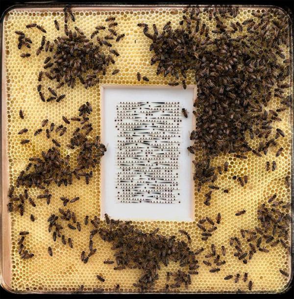 rose-quartz-honeybee-artwork-ideas