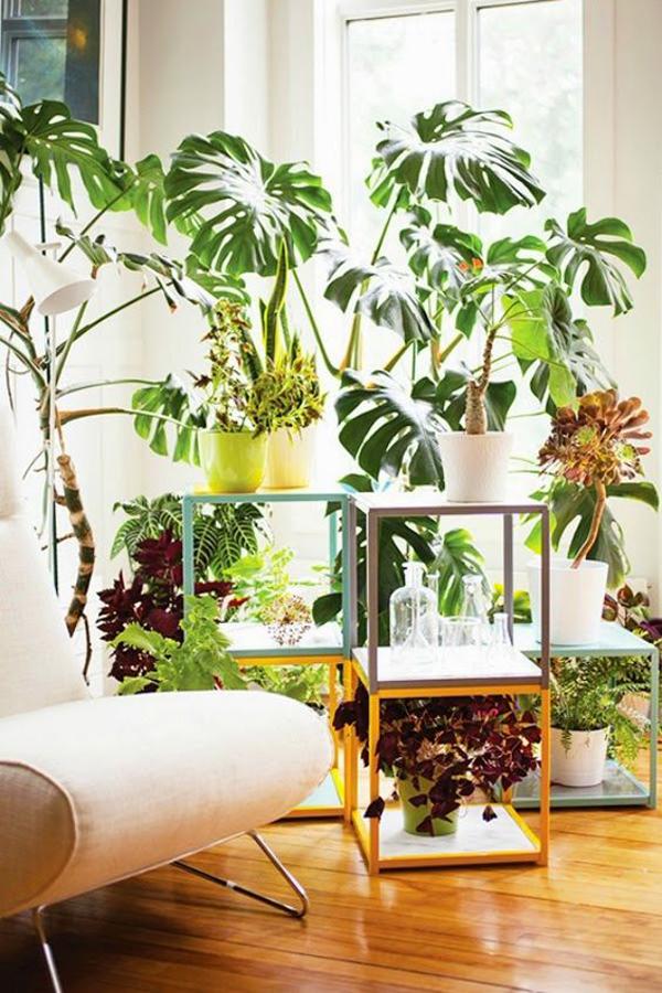 stylish-indoor-plant-decor-ideas