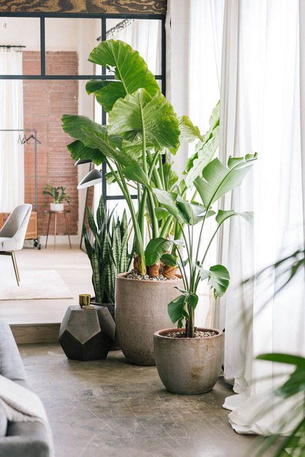 trendy-open-interior-with-tropical-plants