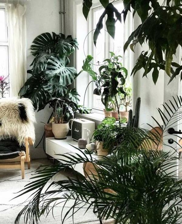 tropical-indoor-garden-with-natural-light