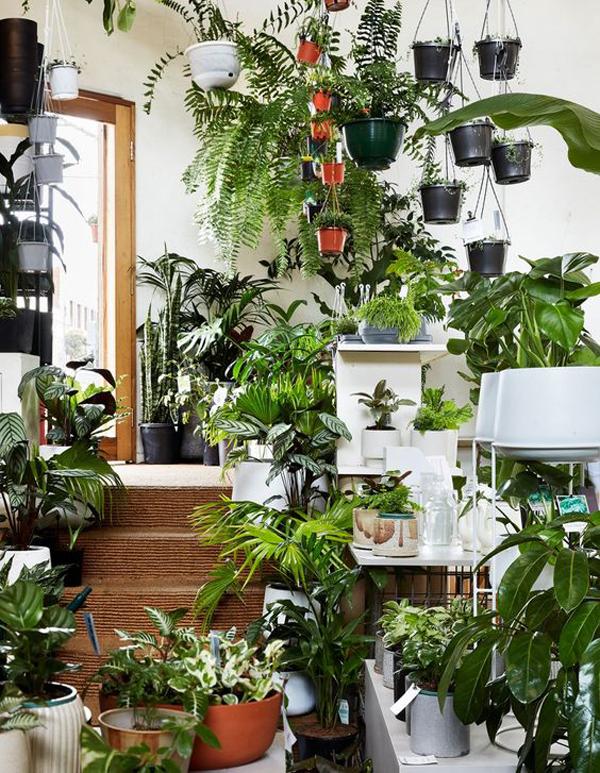 urban-jungle-interior-design