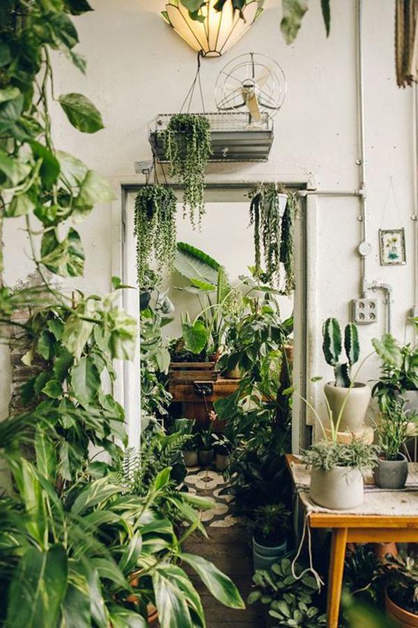 vintage-jungle-interior-design-plants