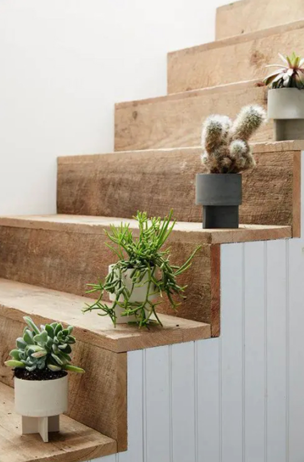 vintage-wood-staircase-with-cactus-plants